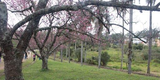 Saída Fotográfica em São Roque - Natureza e Patrimônio Histórico