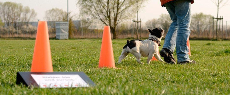 Agility Obedience
