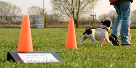 Agility Obedience tickets