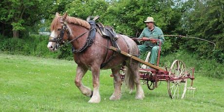Das Rheinisch-Deutsche Kaltblutpferd und sein Einsatz in der Landwirtschaft Tickets