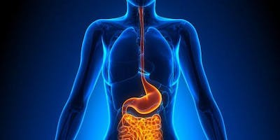 The Oral Link to the Gut Microbiome - Part 2(IN PERSON TICKET)