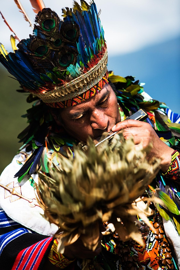 The Healing Forest: Plant Medicine, Isolated Tribes, & Climate Change image