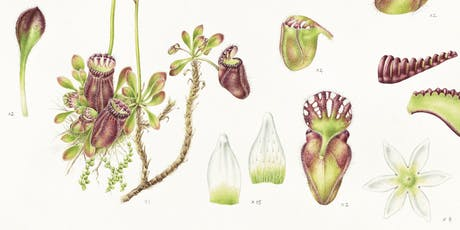 Lauren Black Artist Talk : Painting the Albany Pitcher Plant  tickets