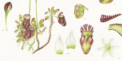Lauren Black Artist Talk : Painting the Albany Pitcher Plant