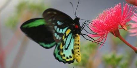 Richmond Birdwing Butterfly Vine workshop tickets