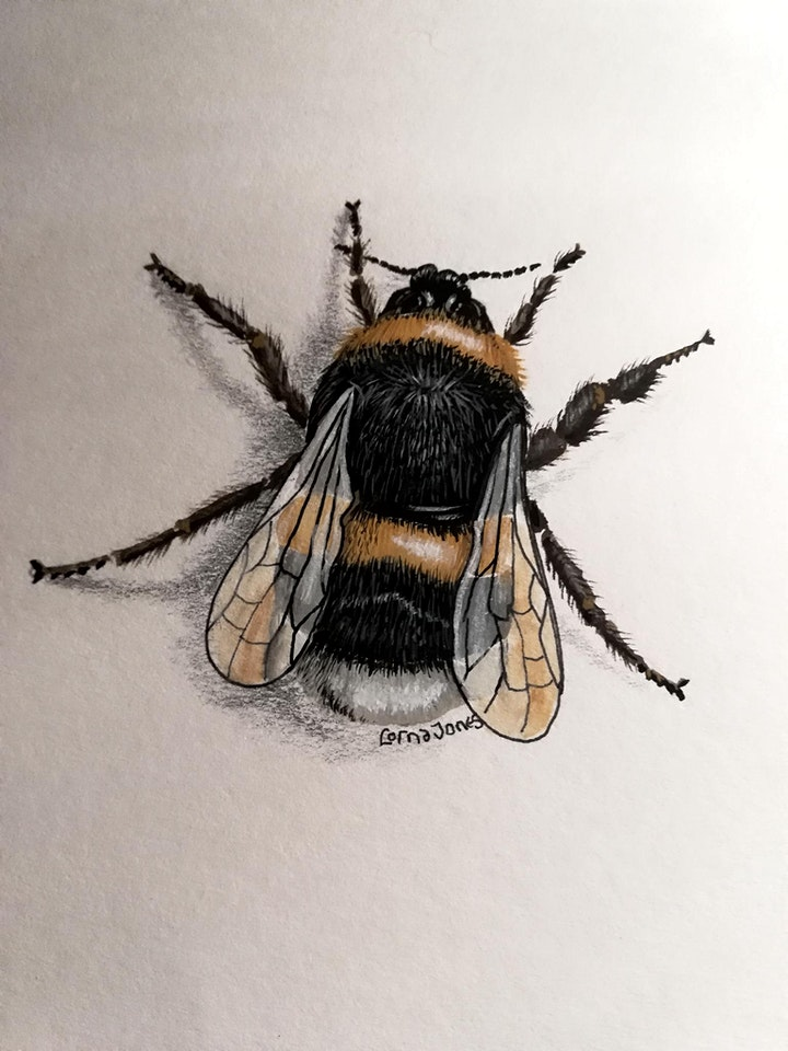 Bee Fiesta image
