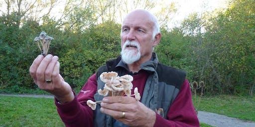 Fungi Foray