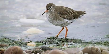 Shorebird Walk, Scottish Seabird Centre tickets