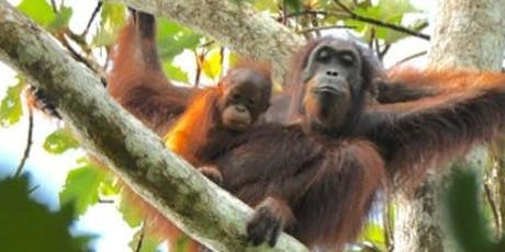 Regrow Borneo  - Balancing air travel carbon emissions launch event tickets
