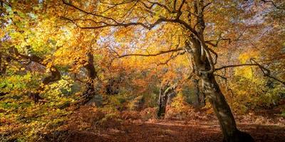 Fabulous autumnal photography