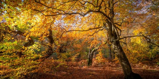 Fabulous autumnal photography