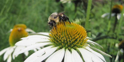 What's Buzzing in Warrenton? Results from Larson Garden Pollinator Study