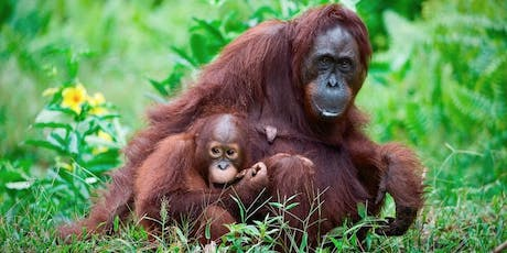 Experiences at Jungle School - Great Ape Ecology tickets