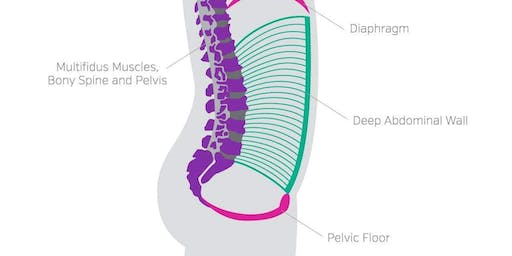 Kudos for Kegels: Or is there more to the Pelvic Floor?