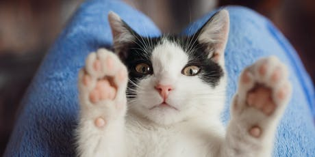 Felinamente: seminario sul comportamento del gatto biglietti