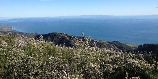 Medicinal Plants of Santa Barbara - GAVIOTA HOT SPRINGS