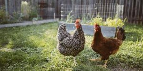 Chook Keeping Workshop - 23 May 2020 tickets