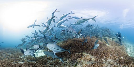 'Chasing Coral' Screening and Panel Discussion