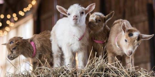 Goat Yoga & Wellness