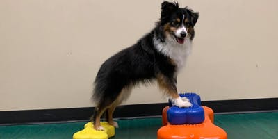 FitPAWS K-9 Fitness Seminar with Bobbie Lyons