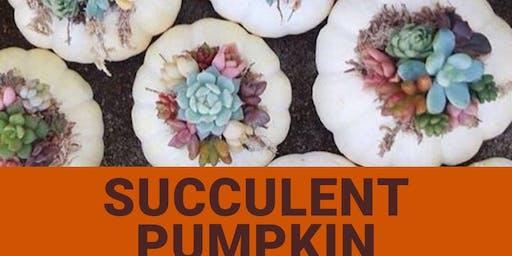 Succulent Pumpkin Workshop