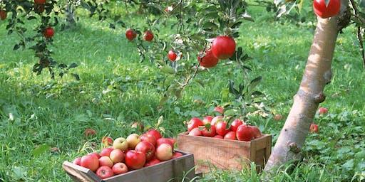 """Goodbye Summer"" Apple Glean!"