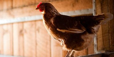 Larimer County Planning Commission Meeting for Poultry