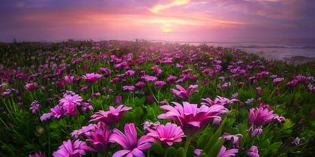 Salutiamo la bella stagione con la Notte Rosa in Brera ✆ 3355290025 biglietti