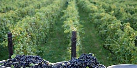 Desayuno Tecnológico: Big Data para Viticultura entradas
