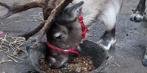 Reindeer Weekend @ Kirktown!