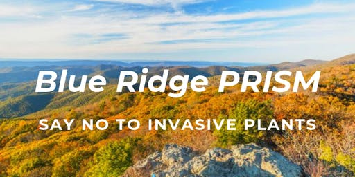 Blue Ridge PRISM Fall Saturday Workshop at Ivy Creek
