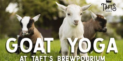Goat Yoga at Taft's