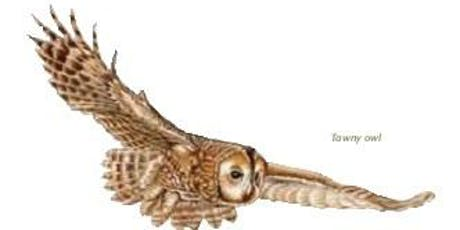 Badock's Wood - Owl Prowl tickets