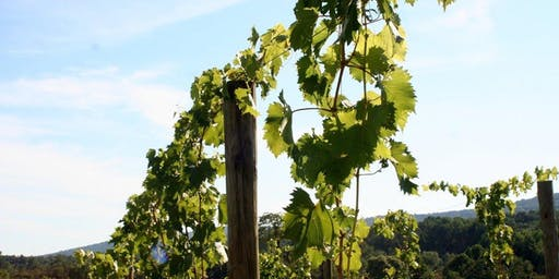 Wine: Fruit of the Vine Between Soil & Sun - Maryland Wine Speaker Series