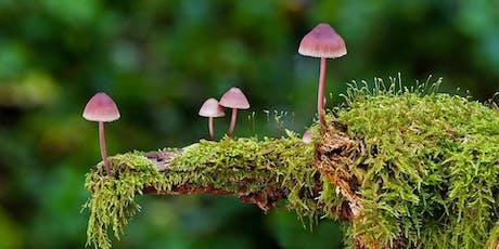 Plant & Mushroom ID Walk tickets