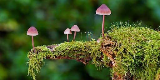 Plant & Mushroom ID Walk