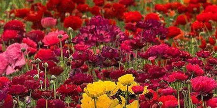 Fall Floral Workshop