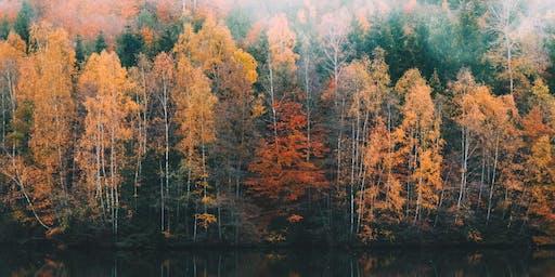 Fall Tune-Up - Nov. 2