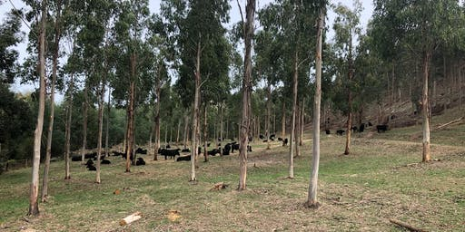 Agroforestry;  a Real Adaptation Strategy in a Changing Climate