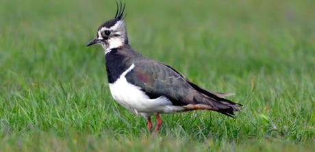 Wetland Birds tickets