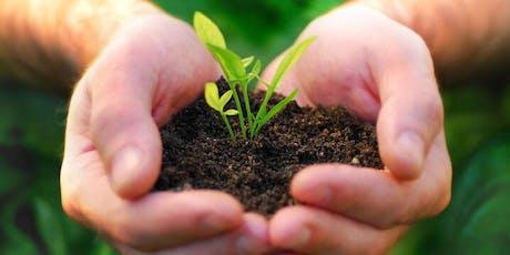 Curso sobre el cultivo en interior y exterior de plantas entradas