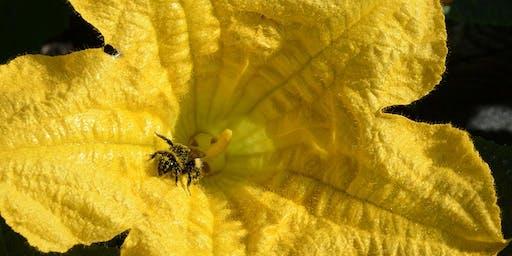 Bee Aware Day with Brigit Strawbridge-Howard 7 june 2020