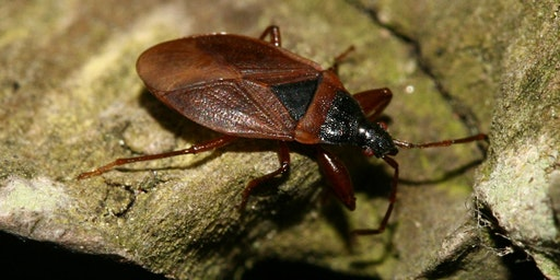 An Introduction to the Identification of Groundbugs