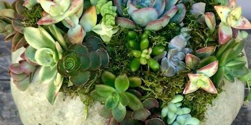 Yardchicks Succulent Workshop