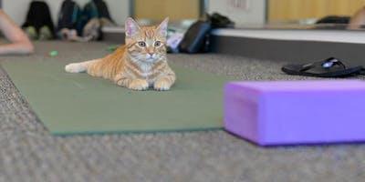 Yoga Practice with Felines - November 2nd
