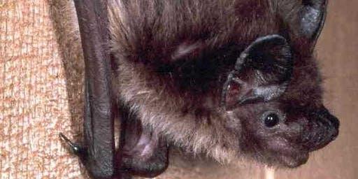 Build a Better World  - Bat Houses