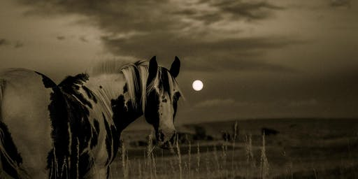 Full Moon Drumming Circle with Horses