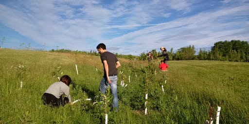 Downsview Park Nature Connections- Tree Planting