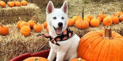 Howl-o-ween Block Party with Dogtopia and Groomingdales