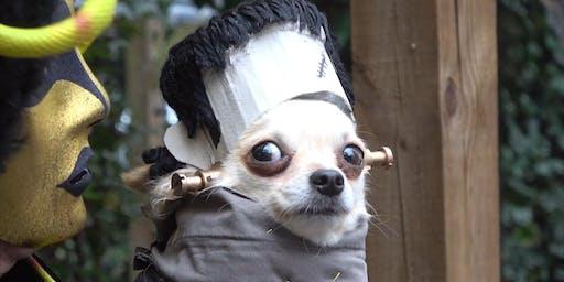 Dog-O-Ween!